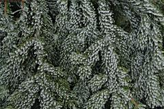 Stylized slippery pine needles Stock Photos