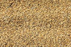 Rice grains background Stock Photos
