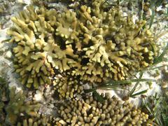 Hard sea corals marine life in Indian ocean Maledives Stock Photos