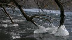 Ice cones on tree--4K Stock Footage