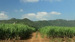Road on sugar cane field, Cloud running background, time lapse 4K Stock Footage