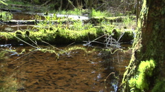Peaceful small flowing stream Stock Footage