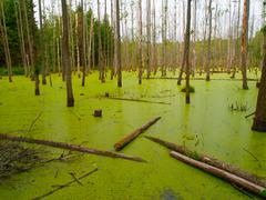 Green swamp in the forest Stock Photos