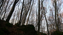 Autumn Forest. Using of camera slider. Stock Footage