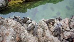Marine Iguanas and Sharks in Galapagos Islands. Stock Footage