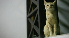 Cat in the night at window. HD. 1920x1080 Stock Footage