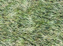 complex grass - stock photo