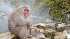 Monkey is relaxation Stock Footage