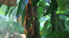 Close up of water drops on the green plants. HD. 1920x1080 Stock Footage