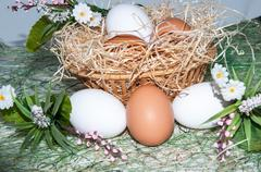 Fresh eggs for the feast of Easter. - stock photo
