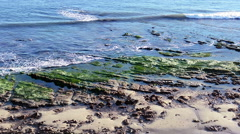 Exposed tide pools with moss - stock footage