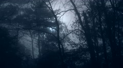 Moving Slowly Through Foggy Swamp by Moonlight Stock Footage