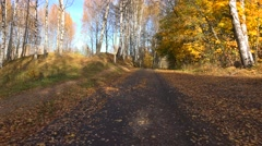 Autumn forest. Travel by car on the road in the fall. 4K. Stock Footage