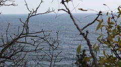 sea view through the undergrowth - stock footage