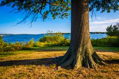 Tree and the back river at cox point park, essex, maryland. Kuvituskuvat