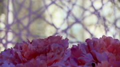 Pink flowers on background of decorative cobwebs Stock Footage