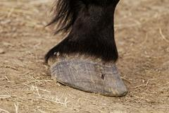Horse leg and hoof Stock Photos