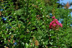 Ukraine - Crimea - Yalta - Nikitsky botanical garden - stock photo
