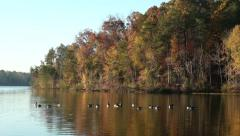 Canadian Geese landing on Lake - stock footage