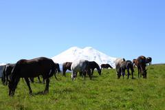 Horses on the summer autumn caucasus meadow Stock Photos