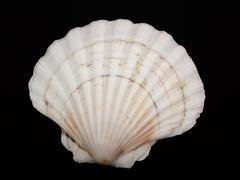 shellfish - stock photo