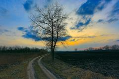 Alone tree near dirt road Stock Photos