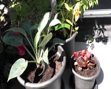 Balcony plants in half shade Stock Footage