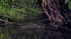Spring-water source, a spring.Environmentally friendly water. Stock Footage