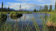 Alaska-Parks Hwy, Nice Low Shot of Creek Stock Footage