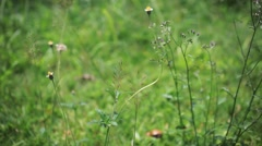 Grass on summer blurred background. HD. 1920x1080 - stock footage