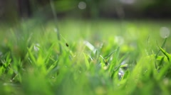 Grass on summer blurred background. Change focus. HD. 1920x1080 Stock Footage