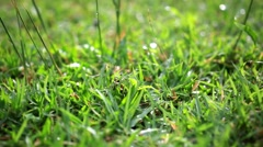Grass on summer blurred background. Change focus. HD. 1920x1080 - stock footage