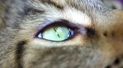Close up of green eye Of Maine Coon black tabby cat. Macro. HD. 1920x1080 - stock footage