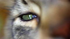 Close up of green eye Of Maine Coon black tabby cat. Macro. HD. 1920x1080 Stock Footage