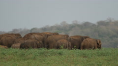 Herd of Asian elephant on the move in Minneriya national park, Sri lanka - stock footage