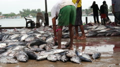 Fish market in Negombo, west coast, Sri Lanka Stock Footage
