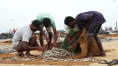 Fishermen collecting the dry fish at the beach in Negombo, west coast, Sri Lanka Stock Footage