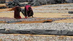 Woman turning the fish around to dry at the beach in Negombo Stock Footage