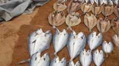 Pan from drying fish at the beach in Negombo, west coast, Sri Lanka Stock Footage