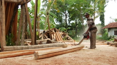 Stock Video Footage of Man with chain saw cutting a palm tree in Sri Lanka
