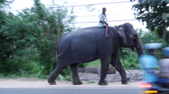 Elephants in the street of Habarana used for tourism Stock Footage