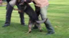 Attack Dog Training Stock Footage