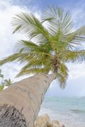 Palm trees on the beach. Stock Photos