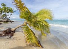 palm trees on the beach. - stock photo