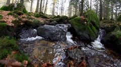 Bavarian forest -autumn Stock Footage