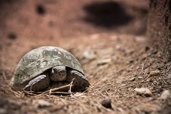 tortoise - stock photo