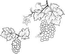 Illustration of a grape Stock Illustration
