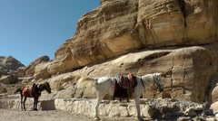 Jordan historical and archaeological city Petra 008 horses in front of rock face Stock Footage