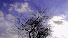 Tree without leaves Stock Footage