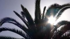 Afternoon Sun and a Palm Tree Stock Footage
